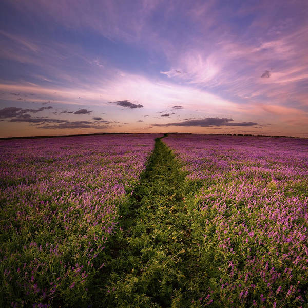 June Photograph - Road In Lilac Flowers by Alex doubovitsky