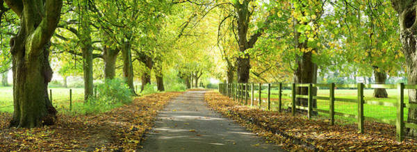 Wall Art - Photograph - Road Leading Through Avenue Of Trees by Travelpix Ltd