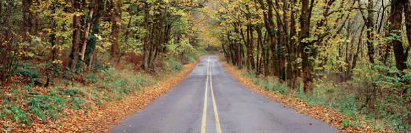 Wall Art - Photograph - Road Passing Through A Forest, Historic by Panoramic Images