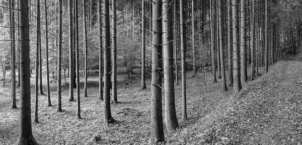 Wall Art - Photograph - Road Passing Through Forest, Stuttgart by Panoramic Images