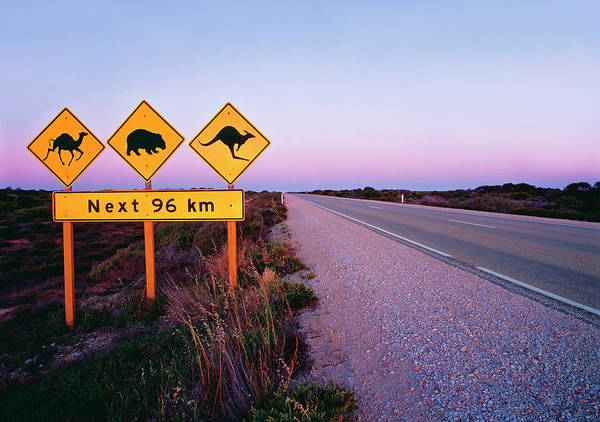 Danger Photograph - Road Signs On The Eyre Highway Near by Australian Scenics