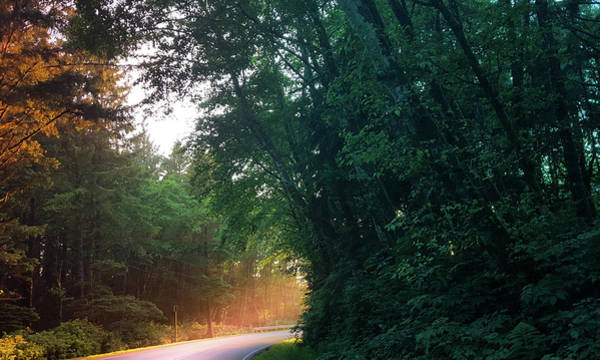 Wall Art - Photograph - Road Surrounded With Trees by Art Spectrum