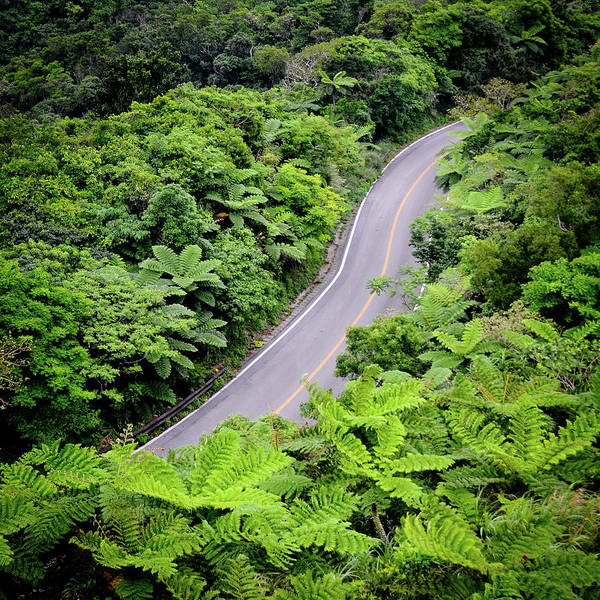 Okinawa Photograph - Road Through Jungle by Jannes Glas