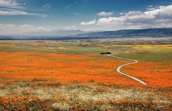 Photograph - Road Through The Wildflowers by Endre Balogh