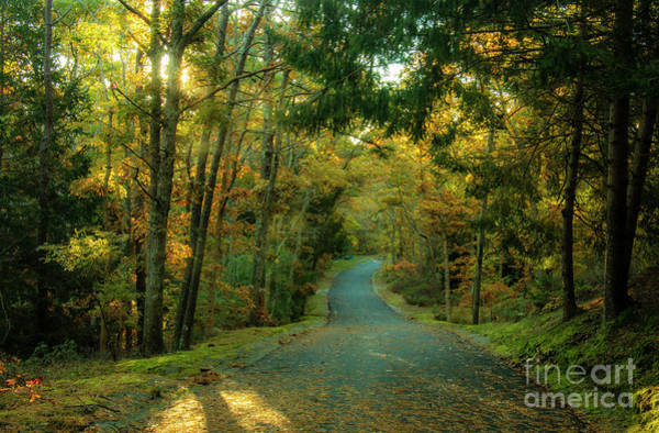 Wall Art - Photograph - Road Through The Woods  by Sharon Mayhak