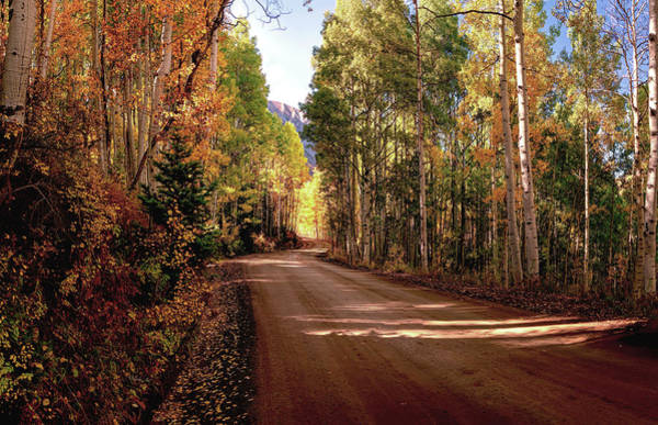 Photograph -  Road To Gothic Autumn Aspens By Olena Art by OLena Art Brand