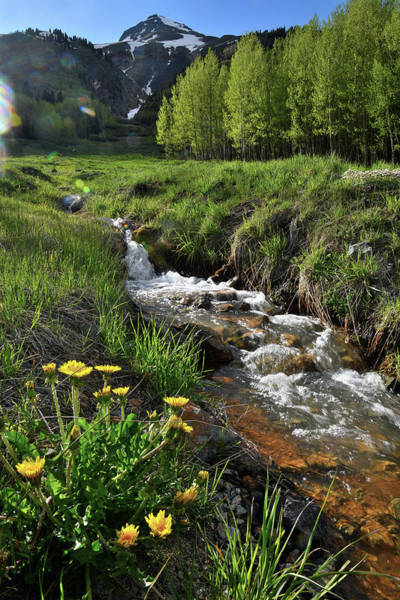 Photograph - Roadside Creek Along Million Dollar Highway by Ray Mathis