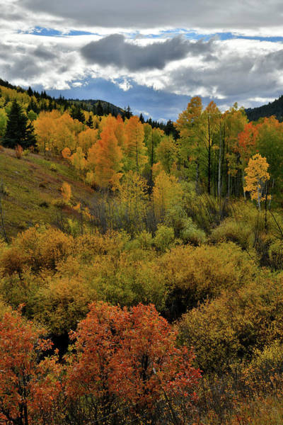 Photograph - Roadside Fall Colors In Colorad by Ray Mathis