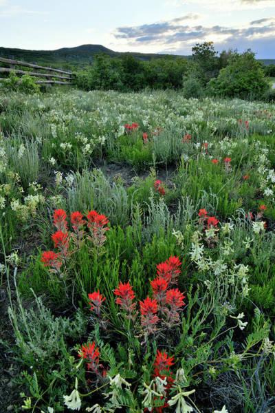 Photograph - Roadside Garden In Colorado by Ray Mathis