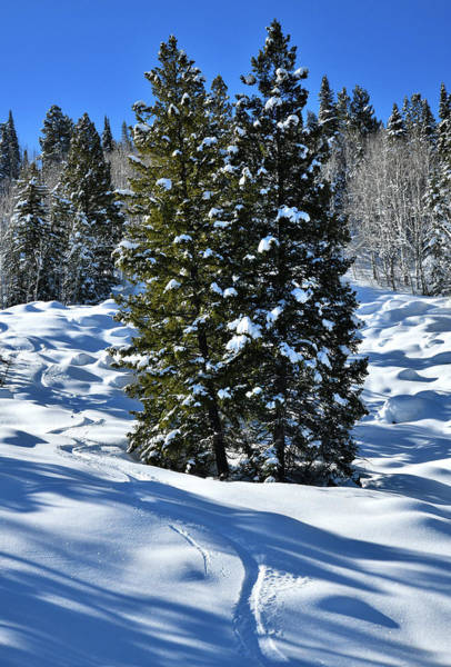 Photograph - Roadside Snow Scene On Grand Mesa In Colorado by Ray Mathis