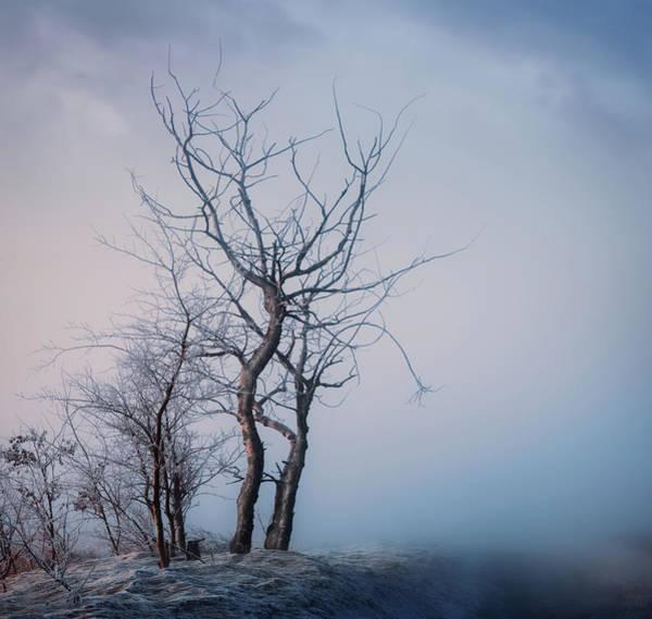 Photograph - Roadside Trees by Dan Jurak