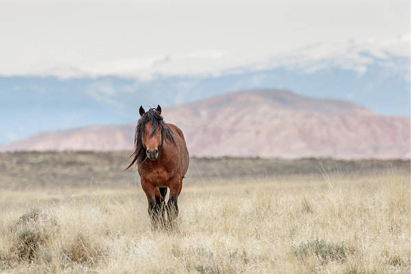 Photograph - Roaming Wild And Free by Ronnie and Frances Howard