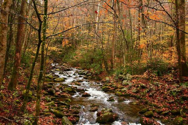 Wall Art - Photograph - Roaring Fork In Autumn by Kevin Wheeler