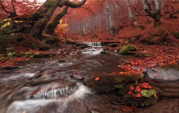 Photograph - Roaring Waters by Vlad Sokolovsky