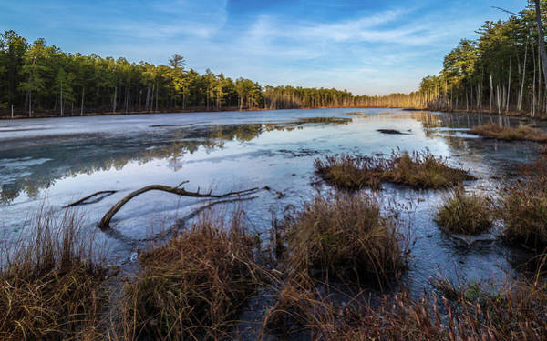 Photograph - Roberts Branch Pine Lands by Louis Dallara