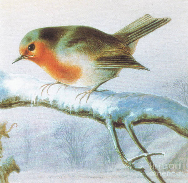 Happy Little Trees Painting - Robin, Color Christmas Card by Harry Bright