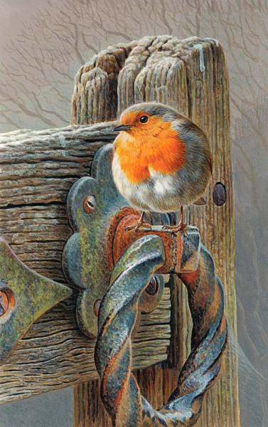 Bird Watching Digital Art - Robin Perching On Gate by Andrew Hutchinson