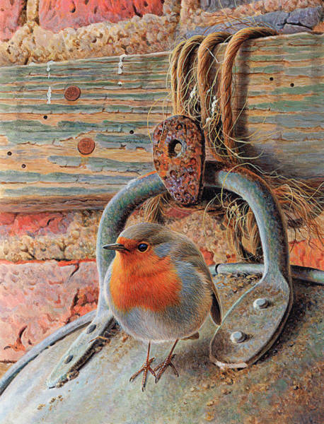 Beauty Of Nature Digital Art - Robin Perching On Metal Bucket by Andrew Hutchinson