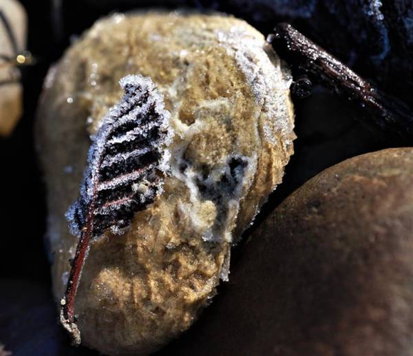 Wall Art - Photograph - Rock And A Leaf by Laura Thomas