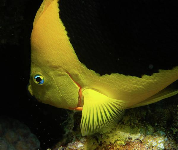 Photograph - Rock Angel Fish by Jean Noren