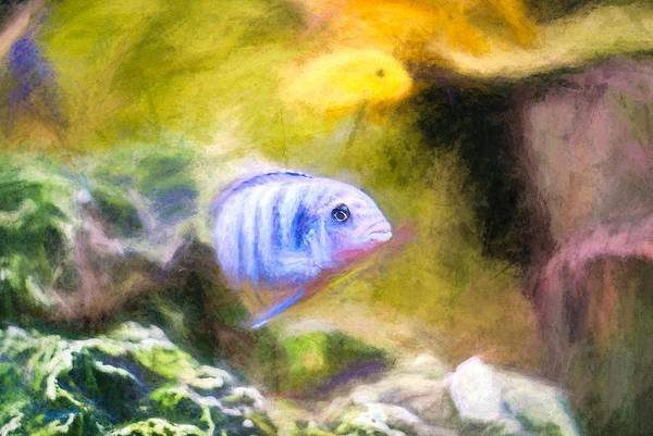 Digital Art - Rock Cichlid Blue Zebra Chalk Smudge by Don Northup