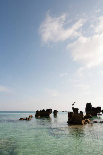 Bermuda Photograph - Rock Formations In Ocean With Birr by Henry Lederer