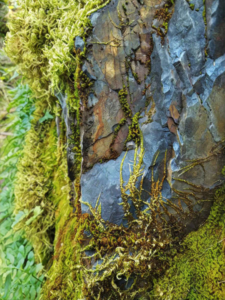 Digital Art - Rock, Moss, And Ferns by Lisa Redfern