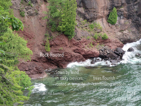 Photograph - Rock-rooted by Ann Horn