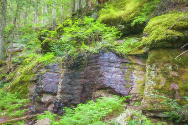 Wall Art - Photograph - Rock Wall Trail Of The Cedars Glacier National Park 101 by Rich Franco