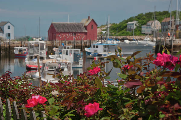 Wall Art - Photograph - Rockport Motif No 1 - Rockport Harbor by Joann Vitali