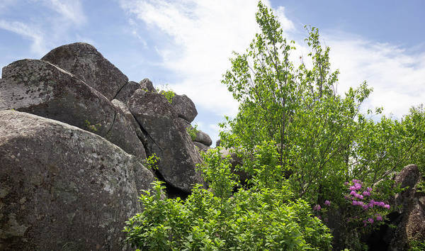 Wall Art - Photograph - Rocks And Rhodies by Teresa Mucha