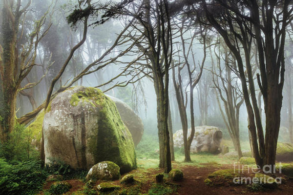Wall Art - Photograph - Rocks In Forest by James Mills / 500px