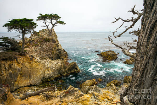 Wall Art - Photograph - Rocky Cliff And Trees In Carmel Near by Lynn Yeh