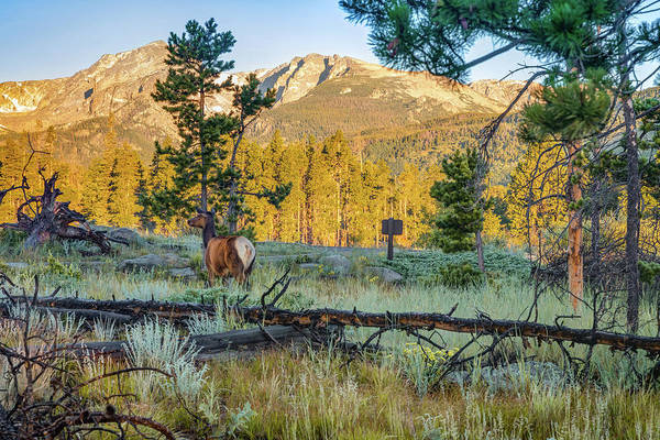 Photograph - Rocky Mountain Elk - Estes Park Colorado Landscape by Gregory Ballos