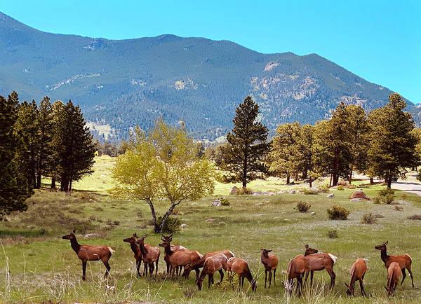 Wall Art - Photograph - Rocky Mountain Elk In Spring by Marilyn Hunt