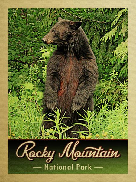 Rocky Mountain Digital Art - Rocky Mountain National Park Bear by Flo Karp