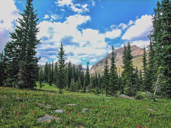 Wall Art - Photograph - Rocky Mountain Wildflowers by Lorraine Baum