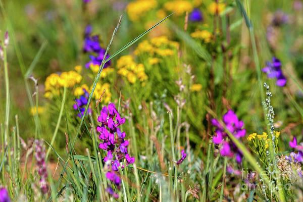 Photograph - Rocky Mountain Wildflowers by Steve Krull