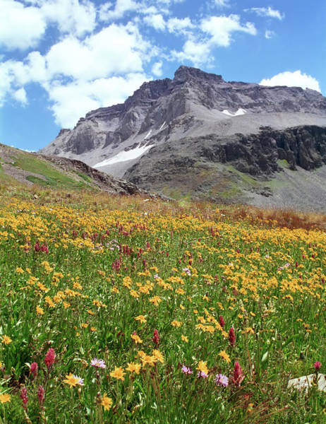 Wall Art - Photograph - Rocky Mountains & Wildflowers by Missing35mm