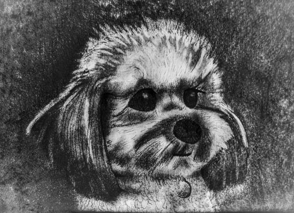 Mutt Drawing - Rocky The Dog Portrait by Michael Panno