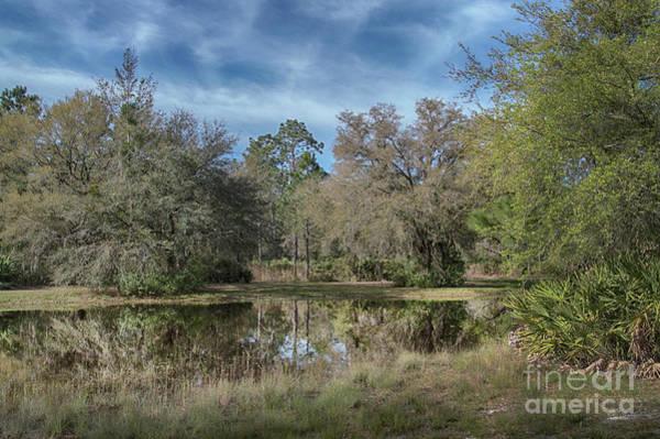 Photograph - Rodman Country by Judy Hall-Folde