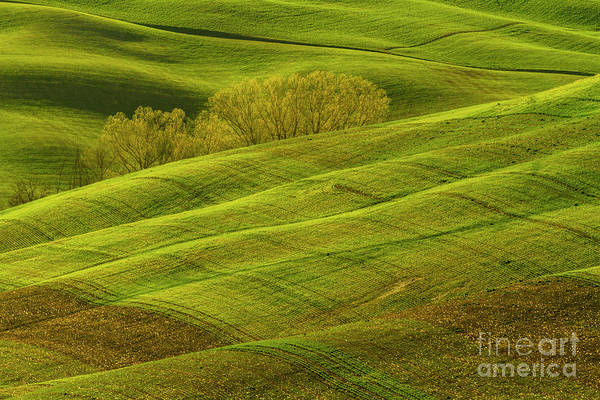 Photograph - Rolling Grassy Landscape Tuscany-1 by Heiko Koehrer-Wagner