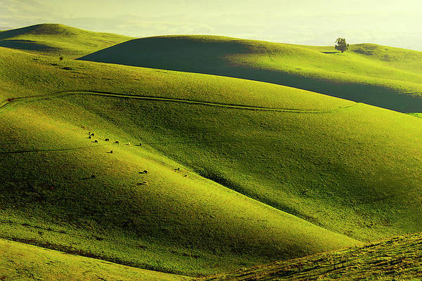 Livermore Wall Art - Photograph - Rolling Hills In Livermore by Copyright (c) Richard Susanto