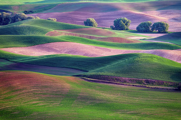 Photograph - Rolling Hills Of The Palouse by Rick Berk