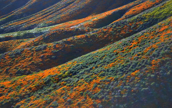 Photograph - Rolling Hillsides Of Color by Glenn McCarthy Art and Photography