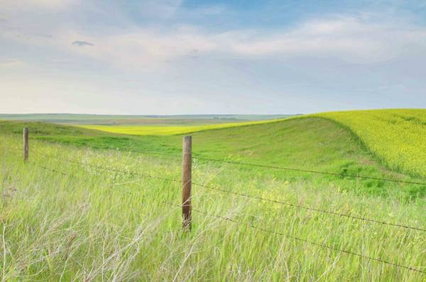 Photograph - Rolling Prairie Fields Of Canola And by Rebecca Schortinghuis