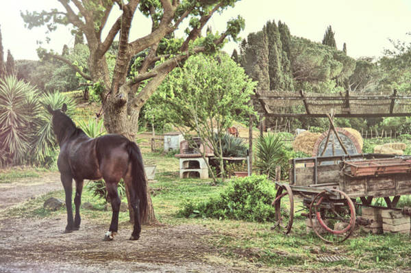Photograph - Roma Stable by JAMART Photography