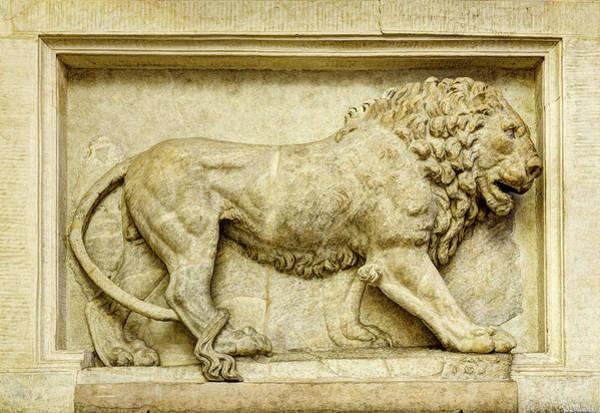 Photograph - Roman Lion by Weston Westmoreland