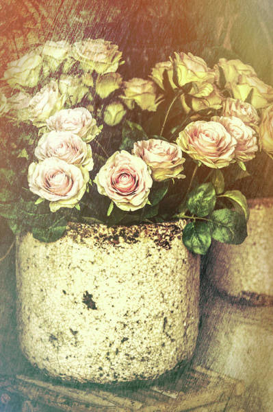 Wall Art - Photograph - Romantic French Roses by Garry Gay