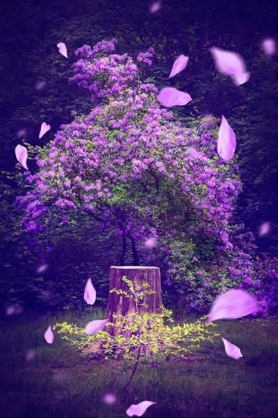 Wall Art - Photograph - Romantic Petals by Svetlana Sewell